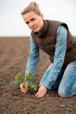 The woman cultivates Canola seedlings in spring. Rapeseed sprout