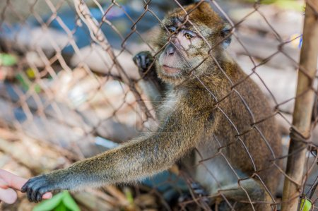 Monkey looking through the bars