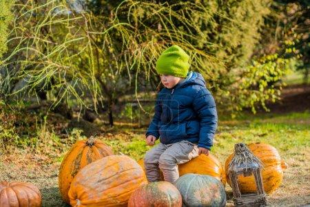 Little boy having fun with pumpkins