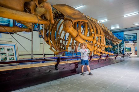 whale skeleton at the Oceanographic Museum of Vietnam.