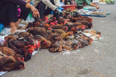Chicken sold in the Vietnamese market.