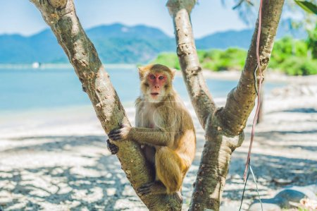 Macaque monkey sitting on the tree.