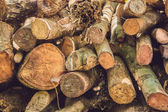 Closeup of logs of trees in nature