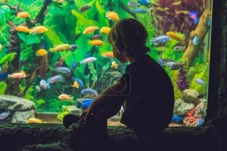 Silhouette of a boy looking at fish