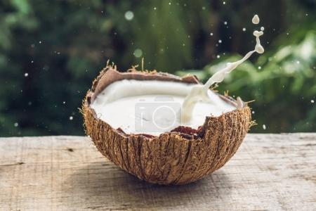 Coconut fruit and milk splash inside it on a background of a pal