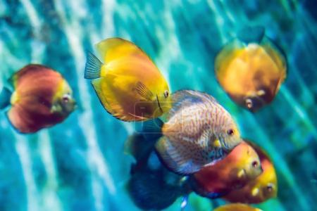 Tropical fish with corals and algae in blue water. Beautiful background of the underwater world.
