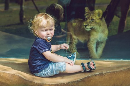 Little boy looking at little lion through glass in zoo.
