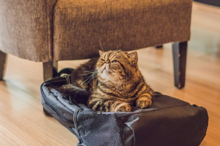 fluffy cat sleeping on backpack