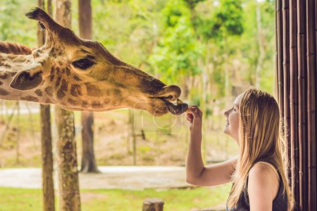 Happy young woman watching and feeding giraffe in zoo. Happy young woman having fun with animals safari park on warm summer day.