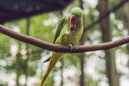 Big beautiful parrot sitting on tree branch