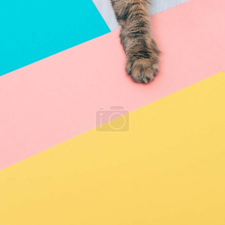 Photo for Furry paw of a cat is lying on colored backgrounds with negative space. minimal. - Royalty Free Image