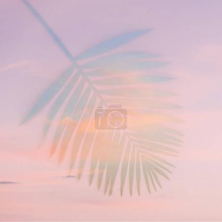 Photo for Palm leaf on sky background. minimal and flat lay - Royalty Free Image