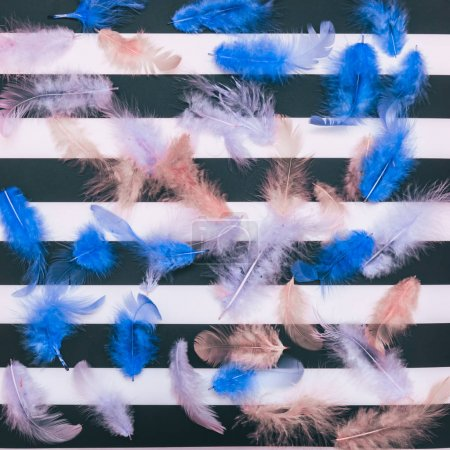 blue feathers on a striped background