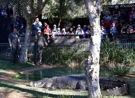 show of Australias crankiest crocodile