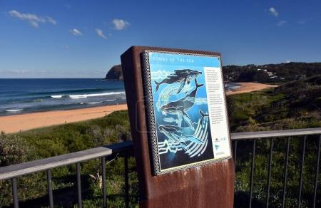 Whale watching point at Copacabana Beach