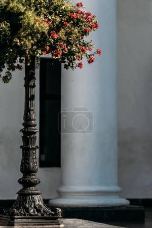Bush with red flowers in a long black vases in the city