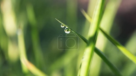 Morning dew drops on green grass, nature background