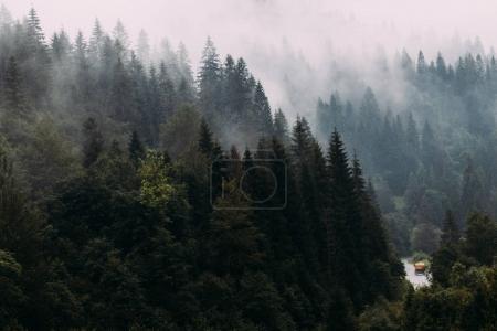 Landscape of Carpathians forest in the fog