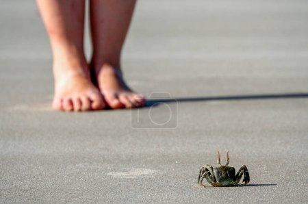 Photo pour Crabe debout devant une fille sur la plage sur la côte malgache - image libre de droit