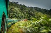 Tropical train going through the jungle