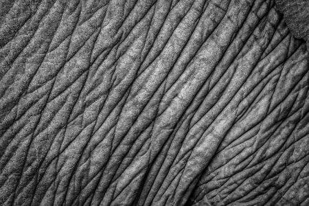 Elephant skin closeup
