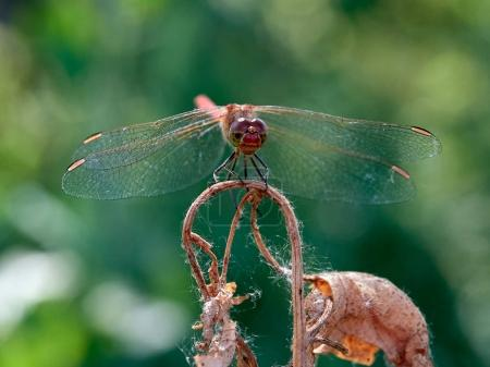 dragonfly sitting on plant