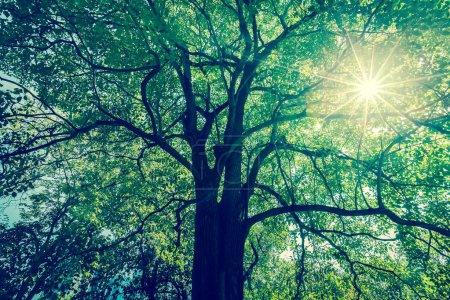 Background of tree branches with green foliage with sun radius. - (Split tone)