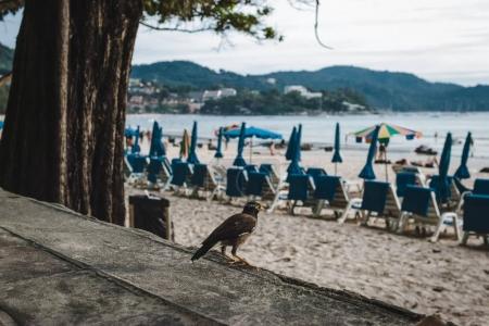 Bird at Kata Beach at Sunset in Phuket Island, Thailand