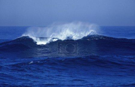 Photo pour WAVE IN PACIFIQUE OCEAN, CALIFORNIE - image libre de droit