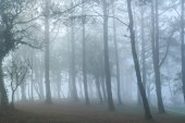 Very foggy in the woods.