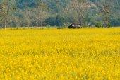 Yellow flower garden