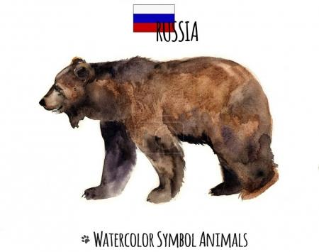 Watercolor animals. Pets illustrations.Cute wild bear.Watercolor Russia symbol. Art illustration of a braun bear silhouette isolated on a white background. Watercolor sketch drawing