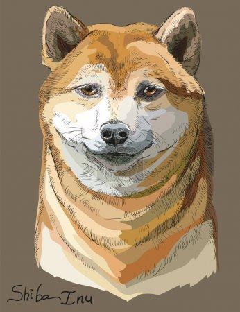 Colored Shiba Inu vector portrait