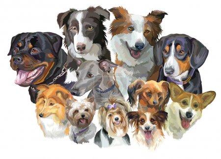 Different dog breeds