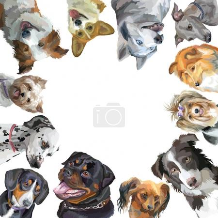 Group of dogs different breeds