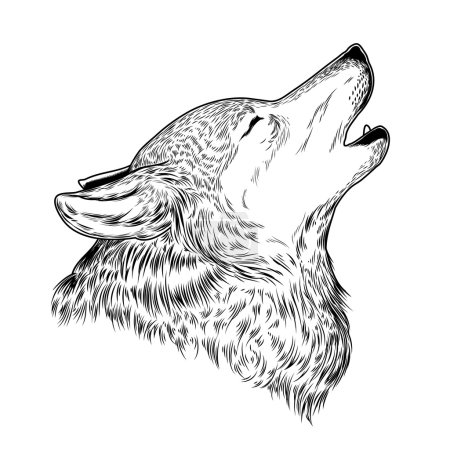 Illustration for Vector illustration of a howling wolf, engraving. Print for T-shirts. - Royalty Free Image
