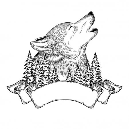 Illustration for Vector illustration of a howling wolf with ribbon, engraving. - Royalty Free Image