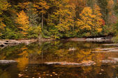 fall forest landscape with small waterfall and reflections in the North Carolina Appalachian mountains near Brevard and Asheville