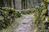 rugged hiking path through thick forest covered in vines and plants and flnked by traditional old dry rock walls covered in lush moss