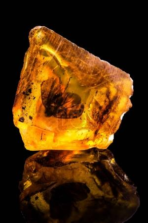 Amazing baltic amber with frozen in this piece a fly , isolated on black background.