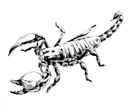 Scorpio is drawn with ink on white background
