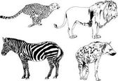 set of vector drawings on the theme of predators bears wolves hyena cheetah are drawn by hand with ink