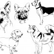 Vector drawings sketches pedigree dogs in the rack...