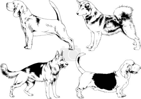 Vector sketches of different breeds of dogs drawn ...