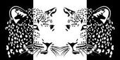 Muzzles of leopards positive and negative