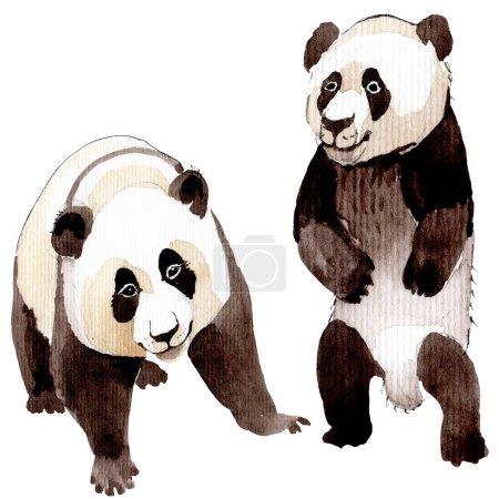 Panda exótica animal salvaje aislado. Conjunto de ilustración de fondo acuarela. Elemento de ilustración animal aislado .
