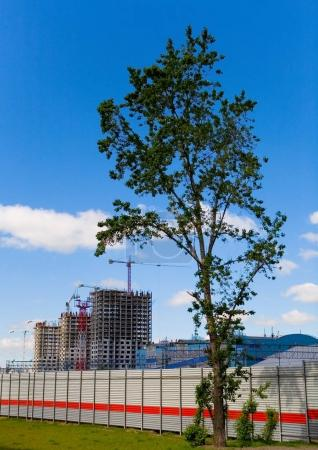 A tree on the background of the construction of a new residentia