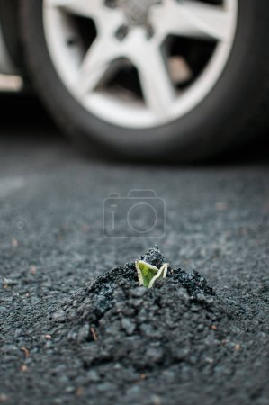 Photo pour Plantes poussent à travers l'asphalte avec fond de roue de voiture - image libre de droit