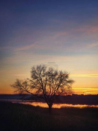 Photo pour Silhouette d'arbre nu sur fond de ciel couchant d'automne. Paysage naturel de steppe idyllique, plan vertical. Fin automne scène rurale près du lac, ambiance paisible saisonnière . - image libre de droit