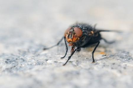 Fly on gray granite slab